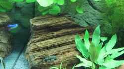 Dekoration im Aquarium Lido 200