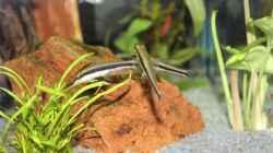Besatz im Aquarium Lido 200