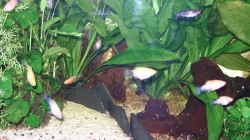 Besatz im Aquarium Becken 27881