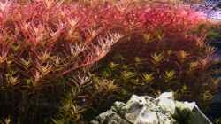 Pflanzen im Aquarium Kölle Zoo