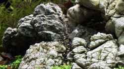 Berggestaltung - Leopardengestein 02.11.2013
