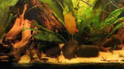Aquarium Amazonas Nebenfluss (aufgelöst)