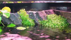 Pflanzen im Aquarium Amazonas Nebenfluss (aufgelöst)