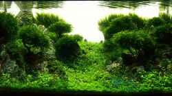 Dekoration im Aquarium Lady Liquid