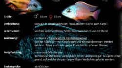 Besatz im Aquarium 575 Liter Malawibecken