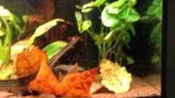 Aquarium Mr. Rabaut's Erben(existiert so nicht mehr)