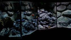 ... Becken nach Austausch Bodengrund und Umgestaltung der Steine....