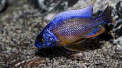 Besatz im Aquarium Corner Reef-aufgelöst-