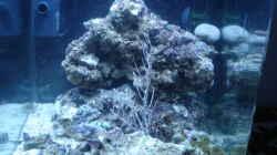 Aquarium Becken 28227