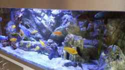 """Aquarium Malawi african sea or """"Der Mühe Lohn"""""""