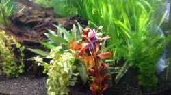 Aquarium Diskus-Becken