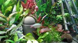 Dekoration im Aquarium amazonas südamerika live