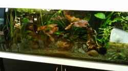 Aquarium amazonas südamerika live