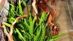 ..nicht alle Pflanzen brauchen Starthilfe .. einige gehen so ins Becken ..