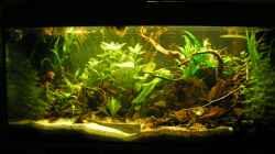 Gesamtes Aquarium 02/2013