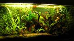 Gesamtes Aquarium nach dem Umgesalten 03/2013