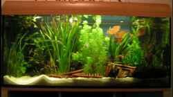komplettes Aquarium - 2011