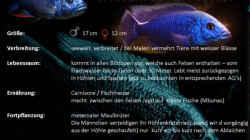 Besatz im Aquarium Malawi Homezone reloaded/aufgelöst