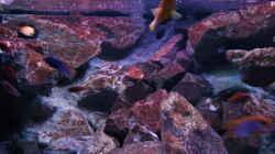 Besatz im Aquarium Becken 28893  Malawidelta
