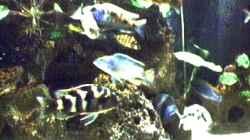 Dekoration im Aquarium Becken 29