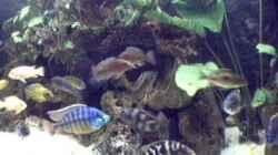 Aquarium Becken 29