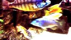 Besatz im Aquarium Becken 29