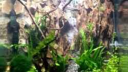 fertig, Pflanzen müssen noch wachsen. Garnelen haben überlebt.
