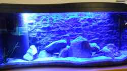 Aquarium Becken 2