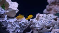 Besatz im Aquarium MALAWIDREAM