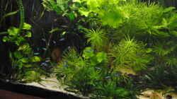 Aquarium Amazonas