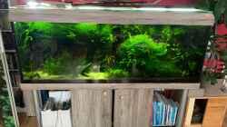 Besatz im Aquarium Amazonas