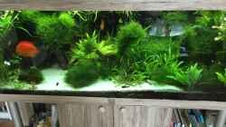 Pflanzen im Aquarium Amazonas
