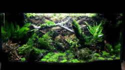 Dekoration im Aquarium Gesellschaftsaquarium