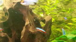 Aquarium 1 Aquarium