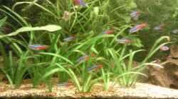 Besatz im Aquarium Skalar-Traum aufgelöst