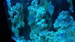 Pflanzen im Aquarium Brackwasserbecken
