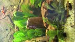 Im linken Bereich des Bildes eine gewelltblättrige Wasserähre,meine Lieblingspflanze..Davor