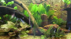 Tigerlotus,Schwertpflanzen,Javafarn,Cryptocorynen,