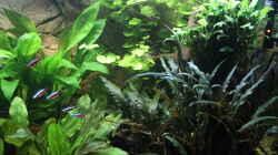 Blick auf die Pflanzen