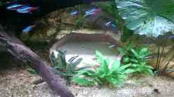 Im Aquarium integriert