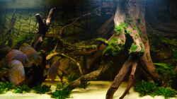 Dekoration im Aquarium Lago Pampo (aufgelöst)