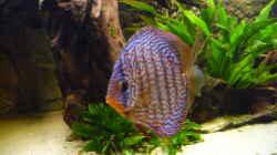 Besatz im Aquarium Lago Pampo (aufgelöst)