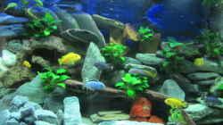 so sieht es heute mit Fischen aus