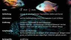 Besatz im Aquarium LAKE MALAWI CICHLIDS