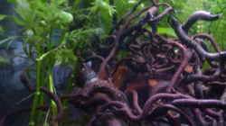 Dekoration im Aquarium Scarlet`s Home (aufgelöst)