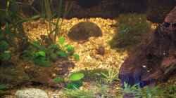 Dekoration im Aquarium Becken 30000 als Raumteiler