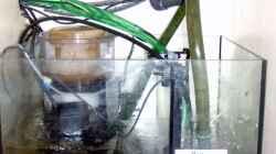 Technik im Aquarium Meerwasser Geisler
