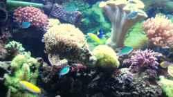 Aquarium Meerwasser Geisler