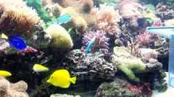 Besatz im Aquarium Meerwasser Geisler