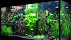 Aquarium Planted world